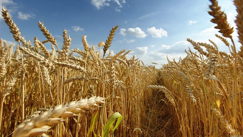 Tarım Görünüm Raporu yayınlandı