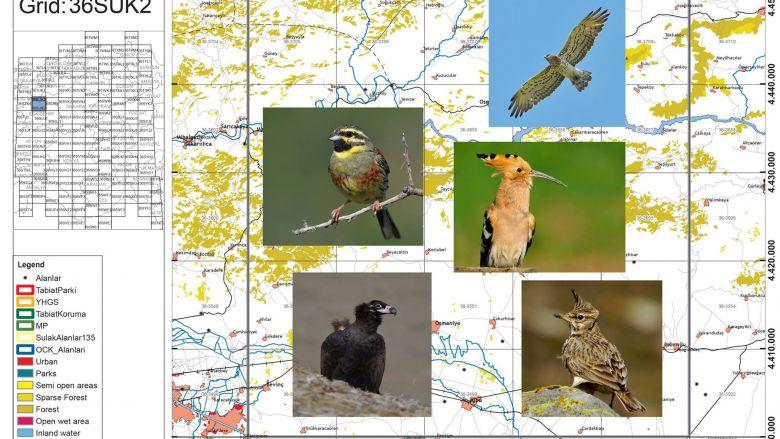 kuş atlası fotoğraflar cenk polat