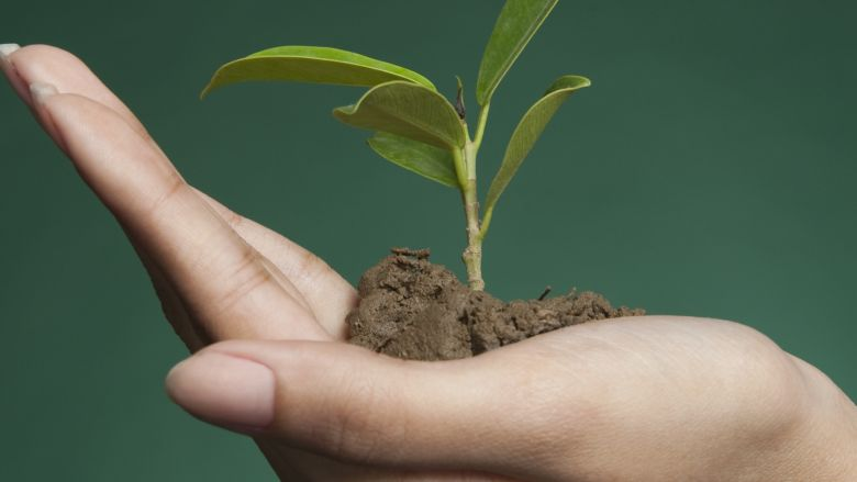 Woman's hand holding a seedling