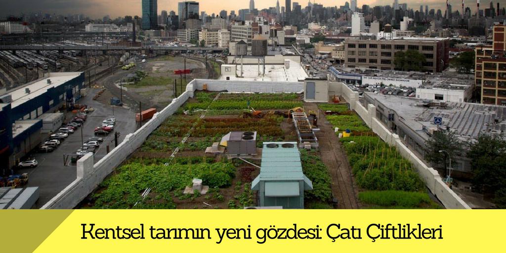 Kentsel tarımın yeni gözdesi : Çatı Çiftlikleri