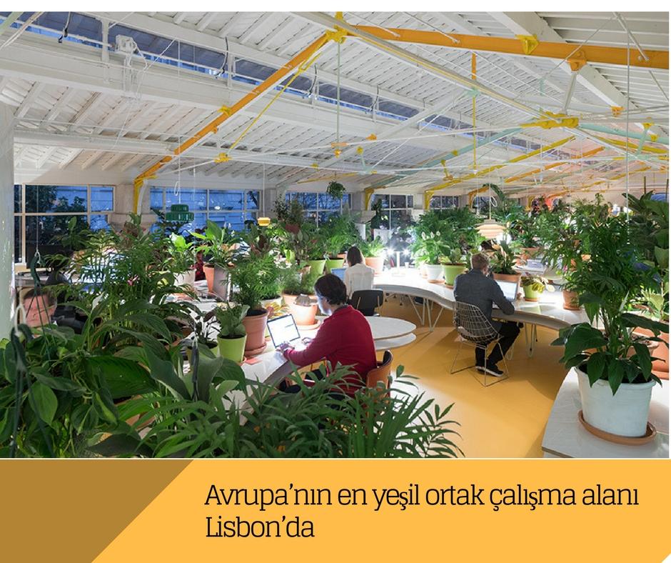 Avrupa'nın en yeşil ortak çalışma alanı Lisbon'da